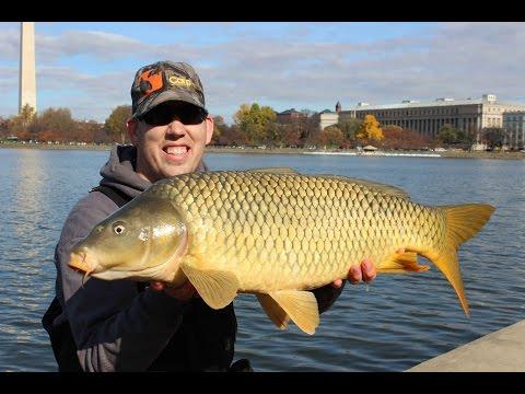 Catch Carp In America - Fall Carp Fishing Event Washington DC