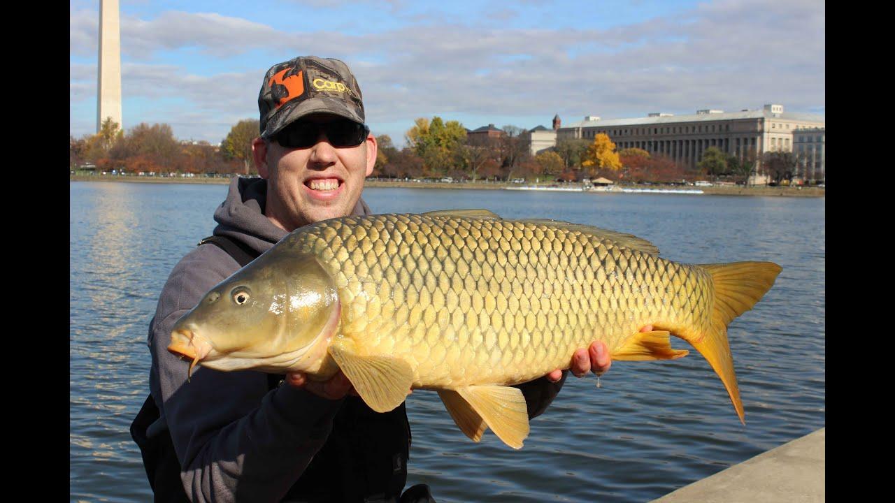 catch carp in america fall carp fishing event washington