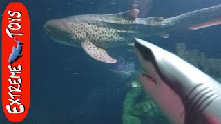 hungry great white shark toy tries to eat all of the sea creatures at the aquarium
