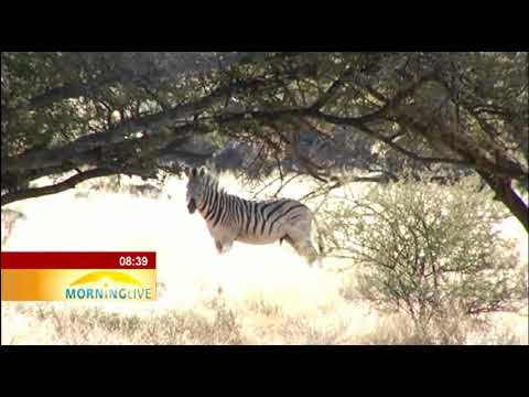SanParks week -  Mokala National Park in the Northern Cape