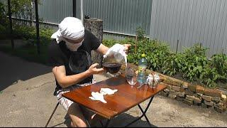 💎 Как вырастить чайный гриб (Kombucha) Скорая помощь ч2