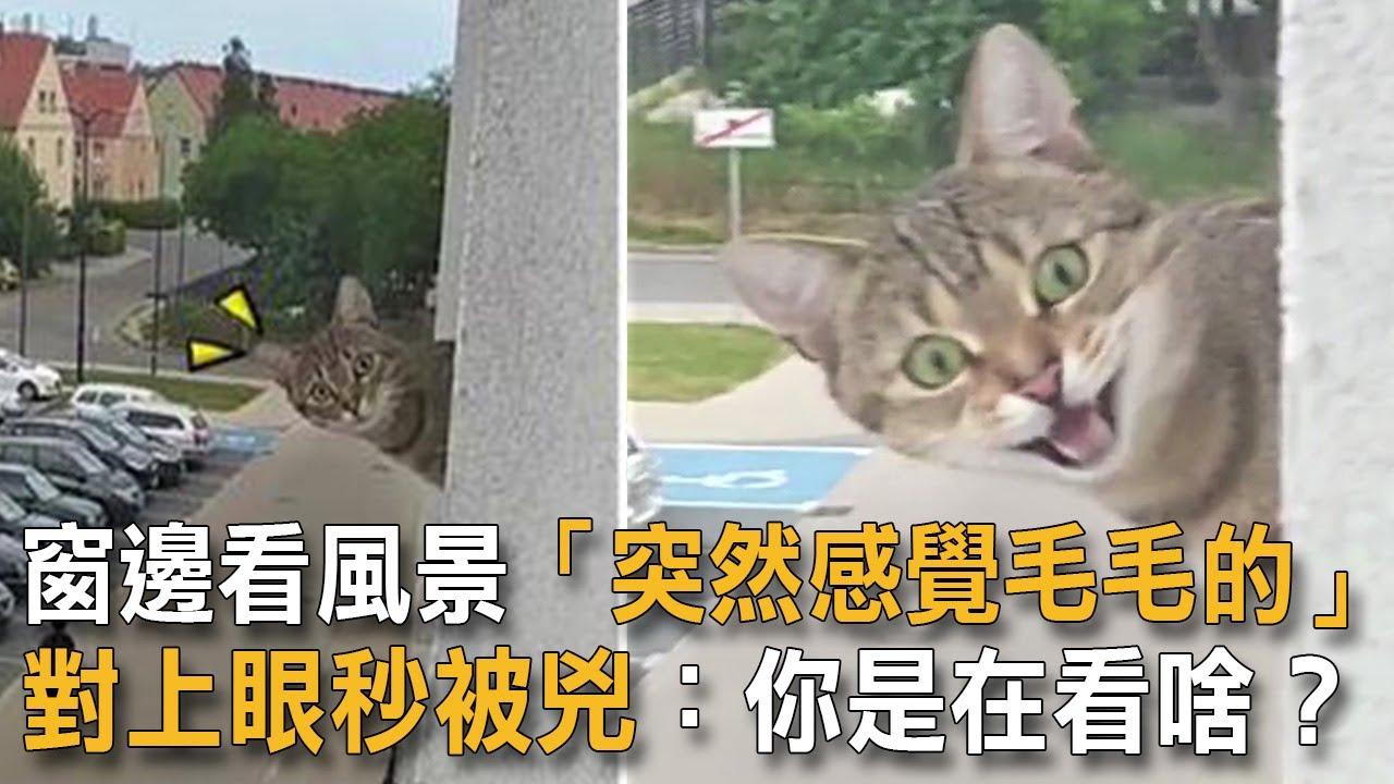 窗邊看風景「突然感覺毛毛的」對上眼秒被兇:你是在看啥?|貓咪搞笑|惡鄰居