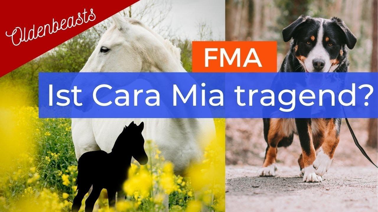 [FMA] Trächtigkeitsuntersuchung 🐴 & zu Besuch bei Maila 🐶 #littleD