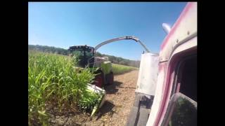 Milky Way Farms Westport Ma,Corn cutting with the GoPro Sept 2014