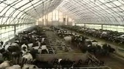 Dairy Barn|Agricultural|Fabric Covered Farm Buildings| 1.360.366.3077