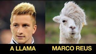 Top 20 Footballers Who Look Like Animals