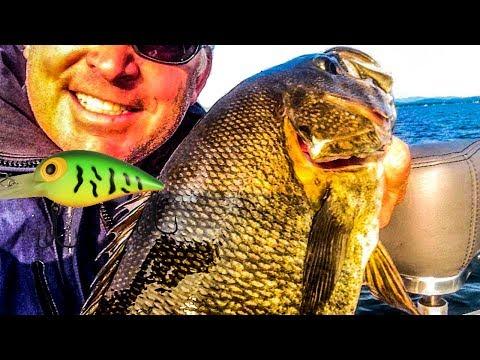 Catch Smallmouth Cranking Crankbaits - Big Bass Fishing Secrets!