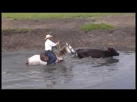 Hagan Ranch Horses 2017 - Lawrence New