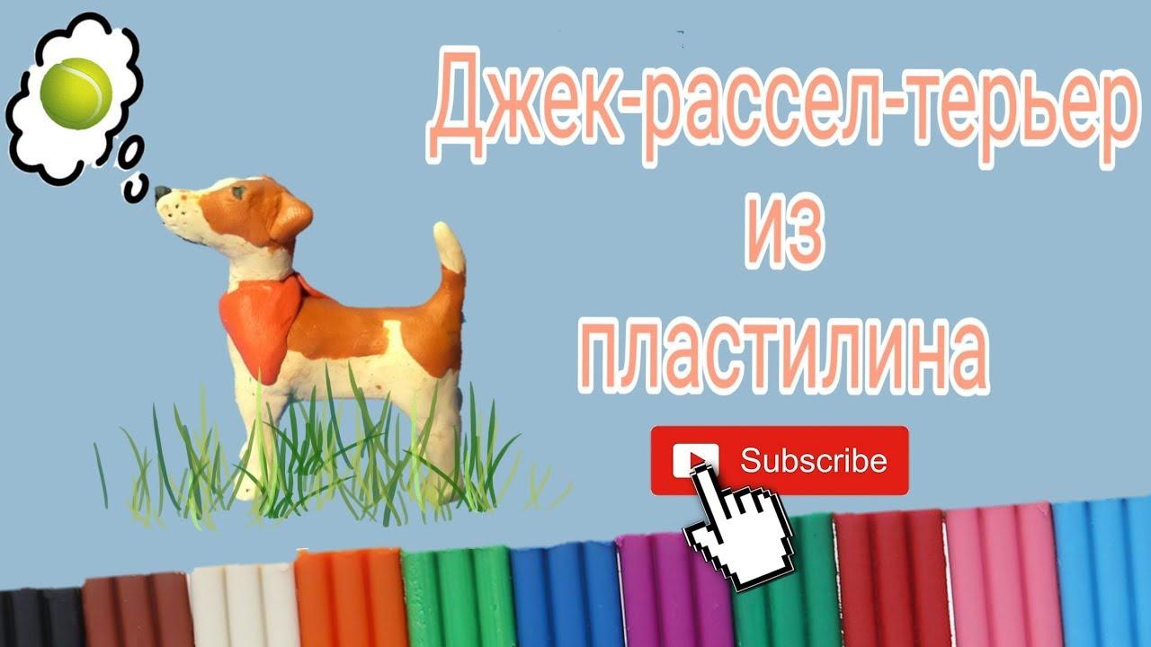 Собака из пластилина.Джек-рассел-терьер. - YouTube