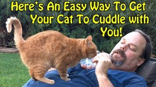 An Easy Way to get your Cat to Cuddle
