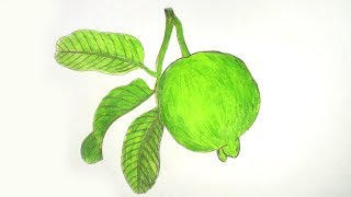 How to draw a Guava step by step very easy