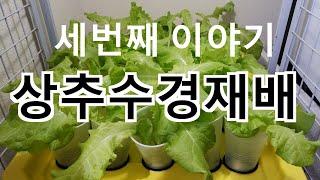 상추 수경재배 3번째 이야기