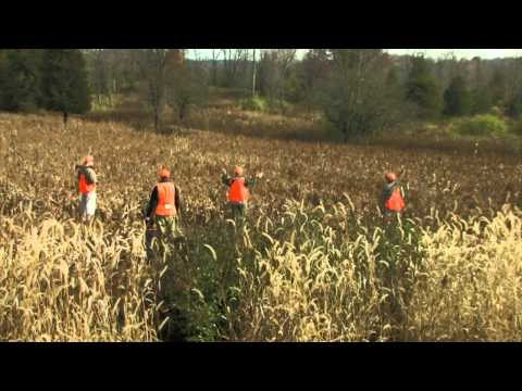 Wingshooting Safety - Bird Hunting Tip