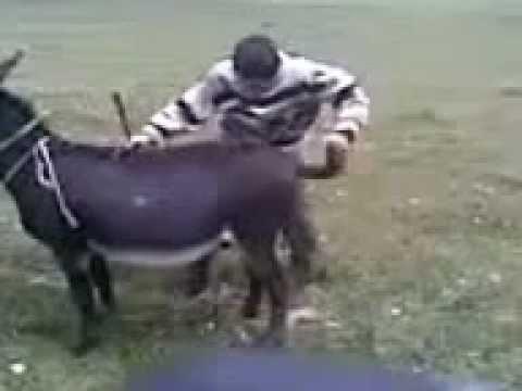 Секс узбек трахает осла