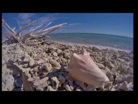 Dry Tortugas National Park Part 3 - Tour of Bush Key