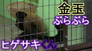 【動物】ヒゲサキ(東山動植物園)