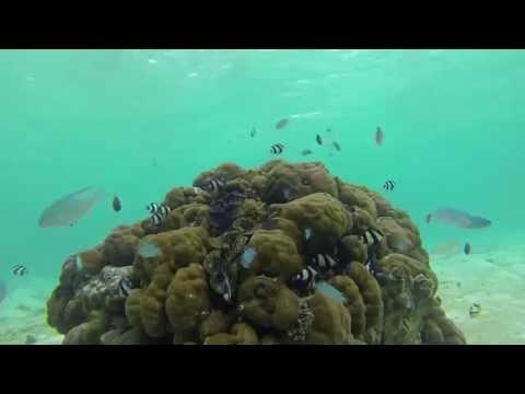 The Aquatic Life in the Indian Ocean