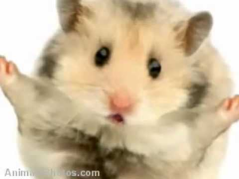 the Hamster time song realy funny must see!!!