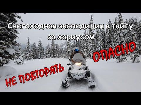В тайгу, за хариусом, на снегоходе - конечно поеду/Зимняя экспедиция на Алтай/100км по льду р Катунь