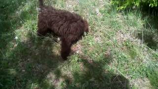 Трюфели - Обучение на вашето куче