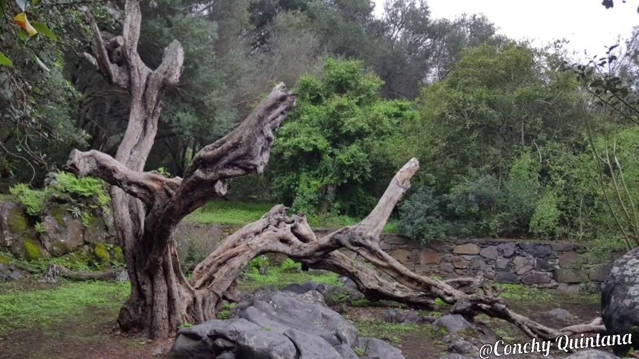 Jard n bot nico viera y clavijo islas canarias youtube for Jardin botanico viera y clavijo