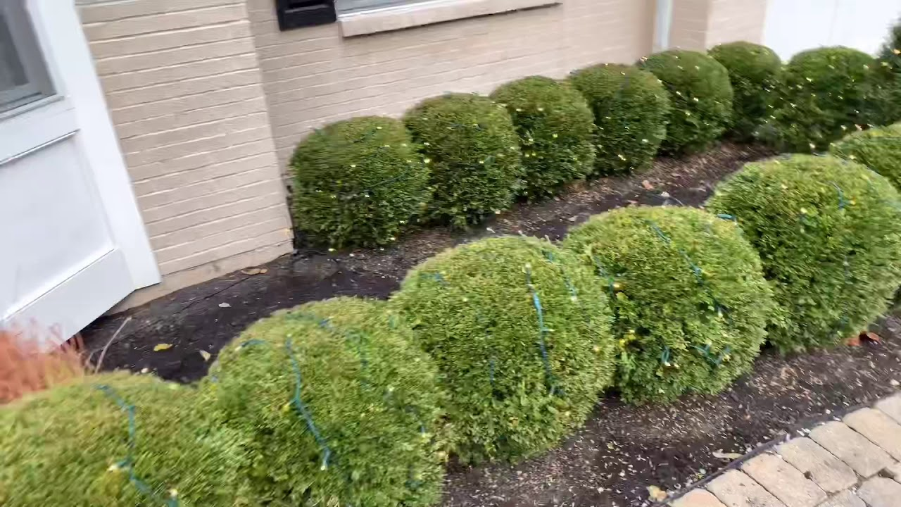 Installing Christmas Lights On Bushes And Powering Them ...