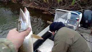 рыбалка на спининг ЩУКА ОКУНЬ сентябрь 2019
