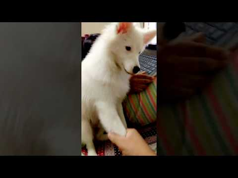 DOG PLAYING WITH HAND
