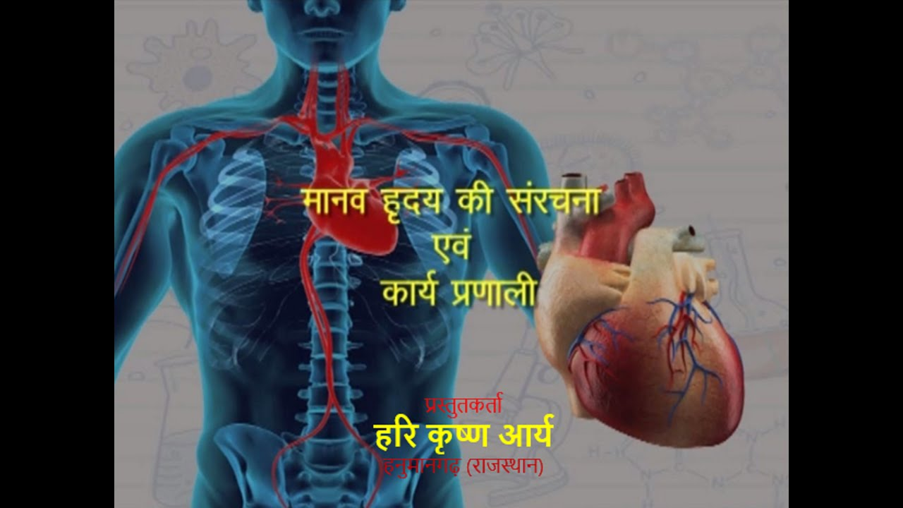 Structure and function of human heart hindi youtube structure and function of human heart hindi ccuart Gallery
