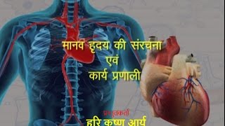 Structure and function of human heart   Hindi