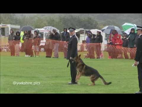Police Dog Competition - Temple Newsam 2016