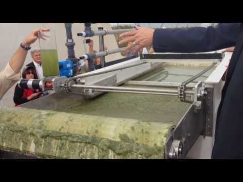 EWS Algae A60: High-Speed, Chemical-Free Algae Harvesting