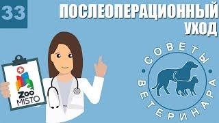 Послеоперационный уход за животным | Что делать после операции | Советы Ветеринара