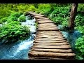 Download Zen Meditation Music, Soothing Music, Relaxing Music Meditation, Zen, Binaural Beats, ☯2587 MP3 song and Music Video
