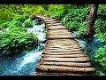 Zen Meditation Music, Soothing Music, Relaxing Music Meditation, Zen, Binaural Beats, ☯2587