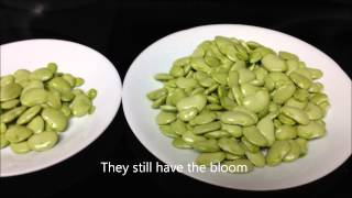 Garden Fresh Lima Beans -eating Raw10-1-14(update Info)*