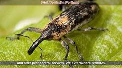 Pest Control Portland | Pest Control Exterminator Services in Portland