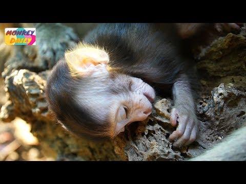 Million Sad! Why Nino baby like this | Nino so weak lay down slowly | Monkey Daily 2976