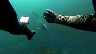 Freediving Owey Island Ireland