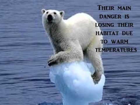 Polar Bear Song
