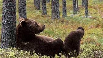 Jean Sibelius - Metsämiehen laulu