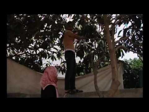 51 Sleepless Gaza Jerusalem.divx