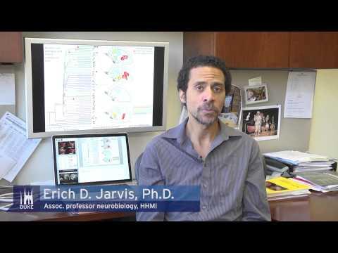 Genes link birdsong and human speech