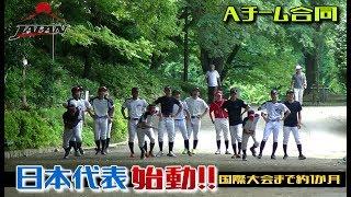 「18人選ぶの苦しかった」軟式野球日本代表始動!ウォーミングアップ -SWBC JAPAN- thumbnail