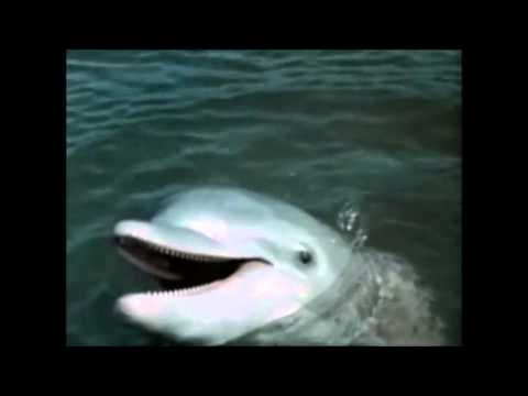 Flipper talks