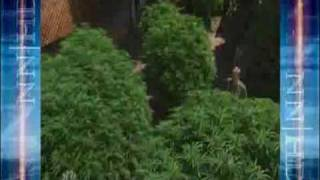 Cannabis Economics - Cash Crop - The Emerald Triangle