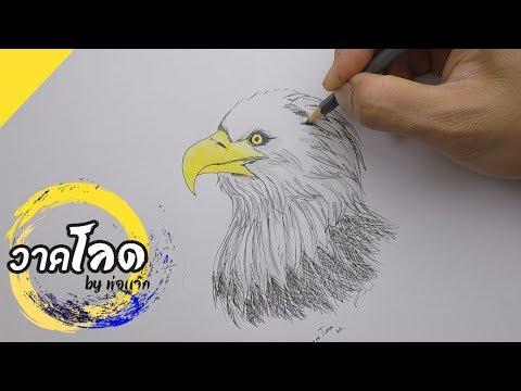 วาดรูป นกอินทรีย์เจ้าเวหา วาดลายเส้นง่ายๆระบายสีไม้นิดหน่อย Draw Eagle   By พ่อแจ๊ก