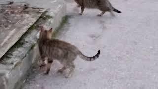 Смешные серые полосатые коты 18.04.2018
