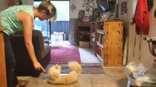 How To Train Your Dog To Dance Clip 02