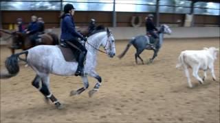 Working Equitation Rinderarbeit Training am 16.10.2016